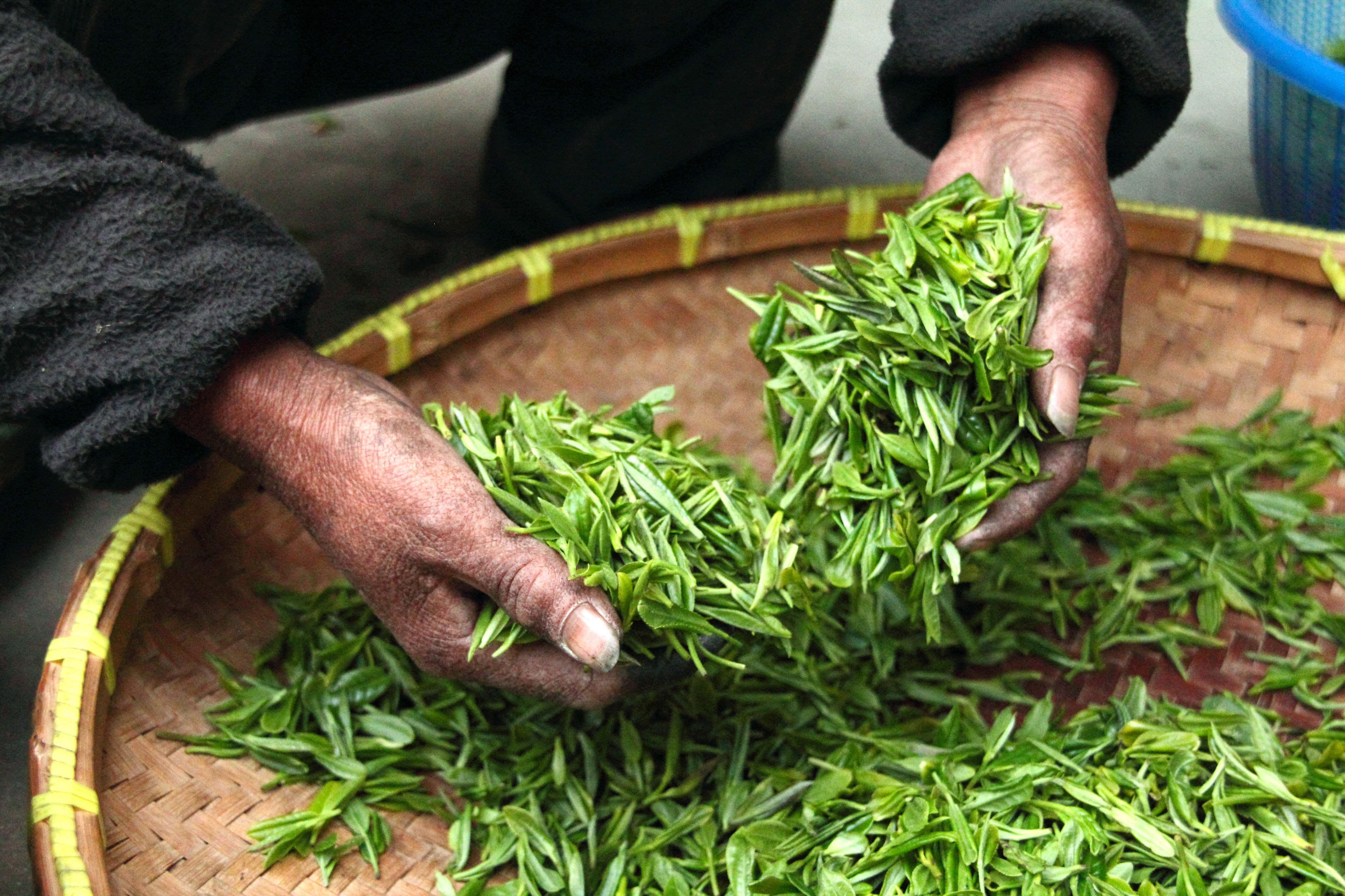 tea-farmhouse-hand-fresh